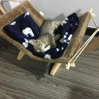 wooden cat swing hammock bed cat resting bed cat toys Fashion , Durable && Comfirtable Cat/kitty Swing Bed Set -dark Grey