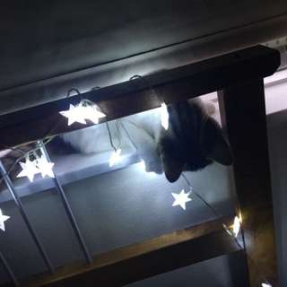 Fairy Lights For FREE