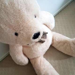 MASSIVE TEDDY BEAR !