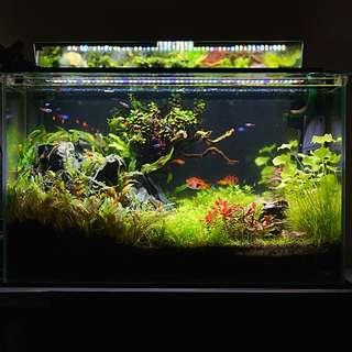 Aquarium Fish tank Complete Setup