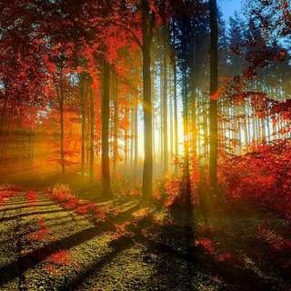 椴木材質拼圖-1000片 楓葉夕陽系列