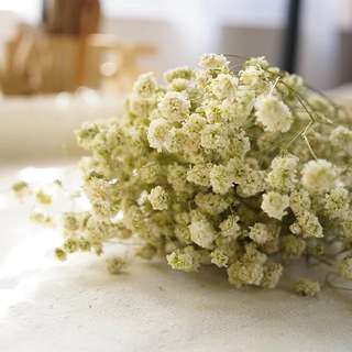💐YourStalkMarket - Dried Real Baby's Breath Flower Rustic Decoration