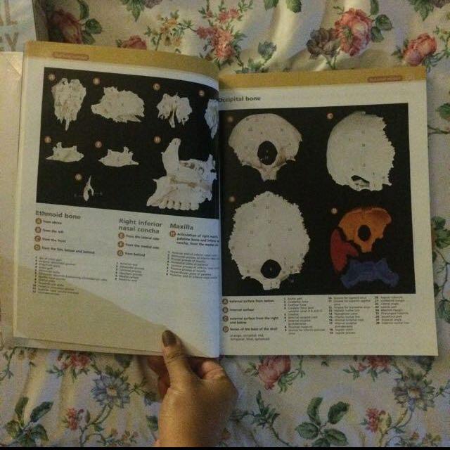 Mcminn Abrahams Clinical Atlas Of Human Anatomy Textbooks On