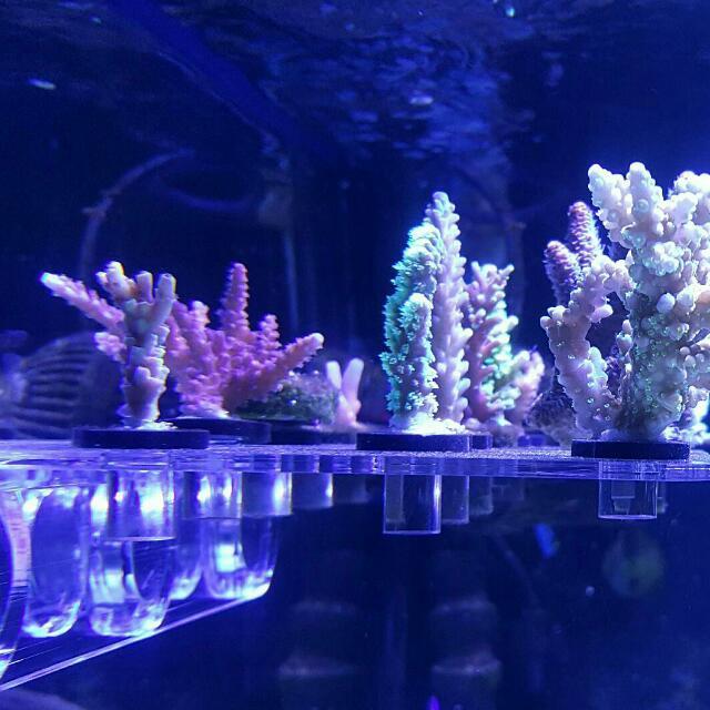 磁吸式珊瑚架