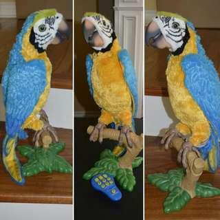 Talking Parrot - Pick Up Don Mills