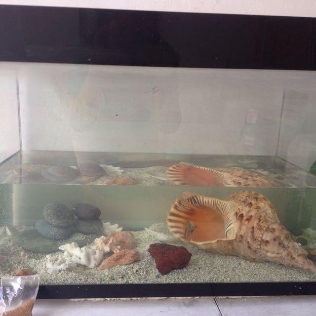 10 Gallons Aquarium