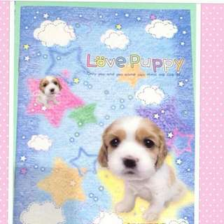Kawaii Puppy Notebook