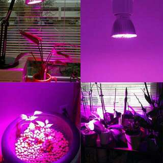 grow lights led gardening carousell singapore