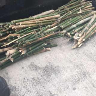 Bamboo Fire Wood