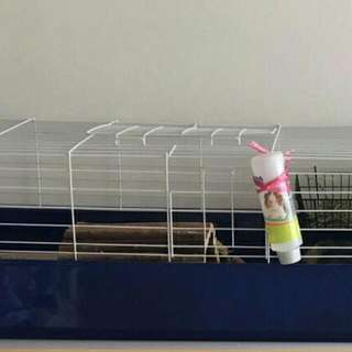 Looking For Guinea Pig Cage