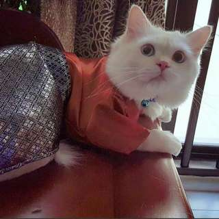 Cat Baju Kurung 2017 For Male