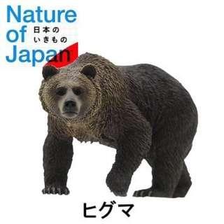 絕版 初代 NTC 動物圖鑑 日本自然生命 第一代 棕熊 轉蛋 扭蛋 公仔 擺飾 仿真 擬真