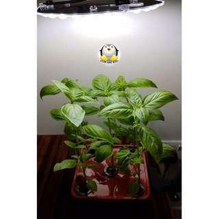 GreenGift Mini Urban Farm - Hydroponic Beginner/Starter Farming Kit