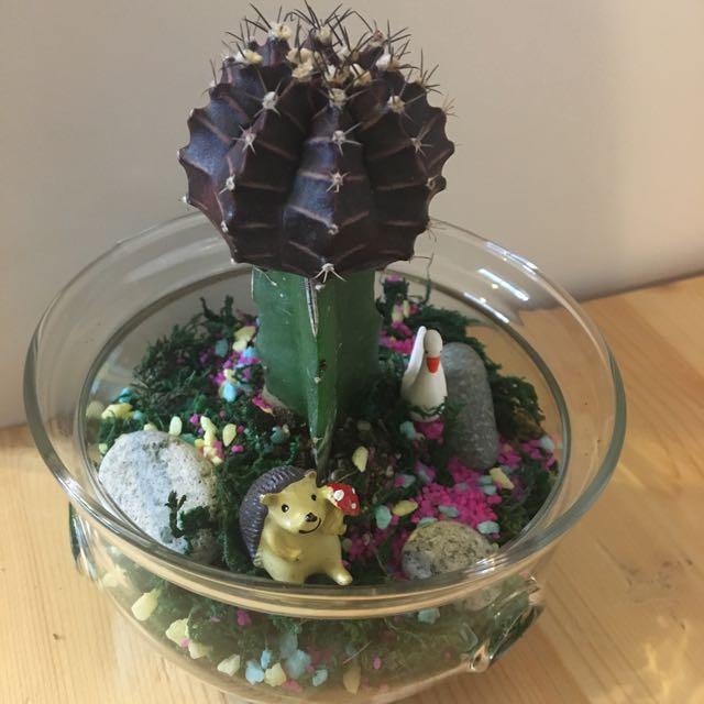 Succulent Cactus Terrarium Gardening On Carousell