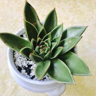 White Decoration Plant