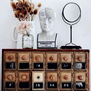 phrenology Porcelain Bust Anatomy Medical oddities