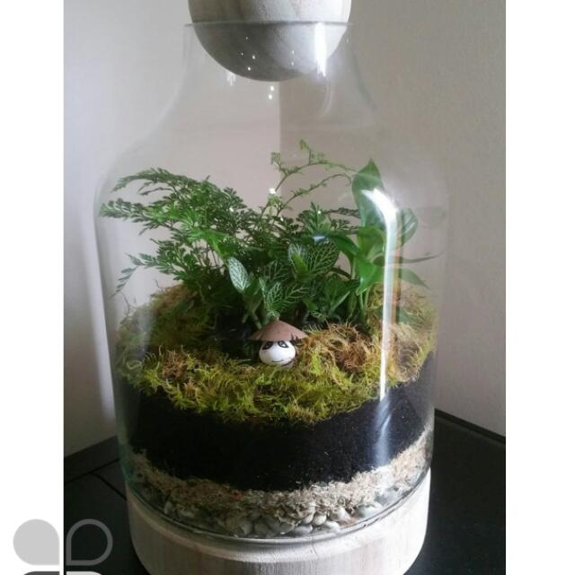Enclosed Moss Terrarium Glass Wood Plant Moss 18cm Outdoors
