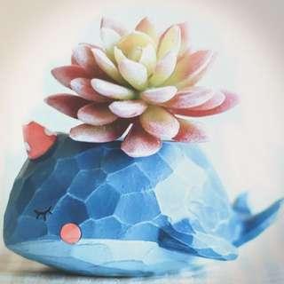 Unique Design Succulent Pot