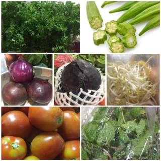 Sayur Mayur
