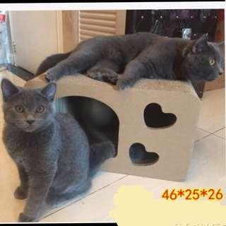 (NEW!)$35 Cat Scratch Bed