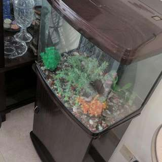 Curved Aquarium With Wooden Stand