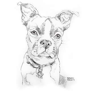 Custom Dog and Cat Portrait Pet and Ink Drawing made to order, Favorite Pet personalized art drawings from photo, Gift, memory, handdrawing