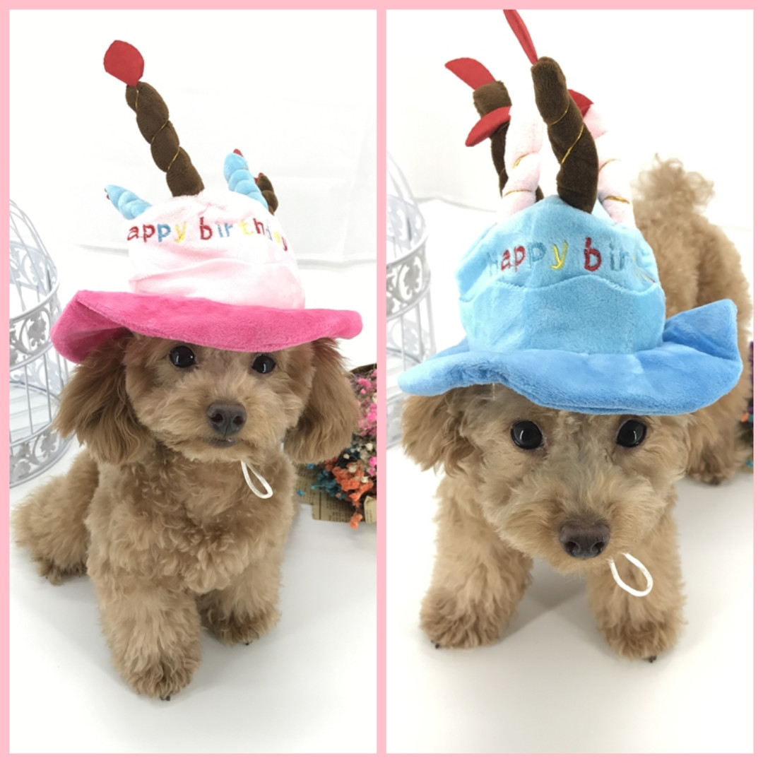 Dog Cat Birthday Party Hat Pet Supplies On Carousell