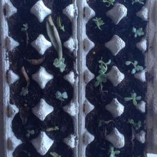 Succulent Starter Kits