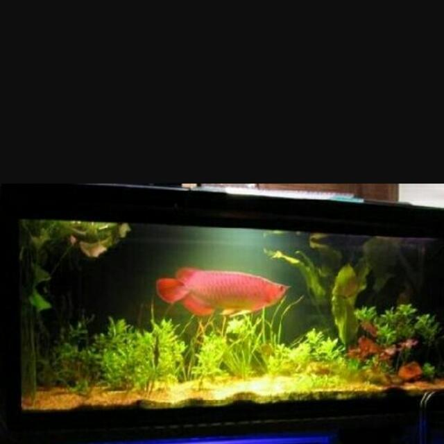 2呎觀賞魚缸。 寬31公分 長78公分,附:白沙,氣泡調節氣閥,整組含燈,含置物櫃。
