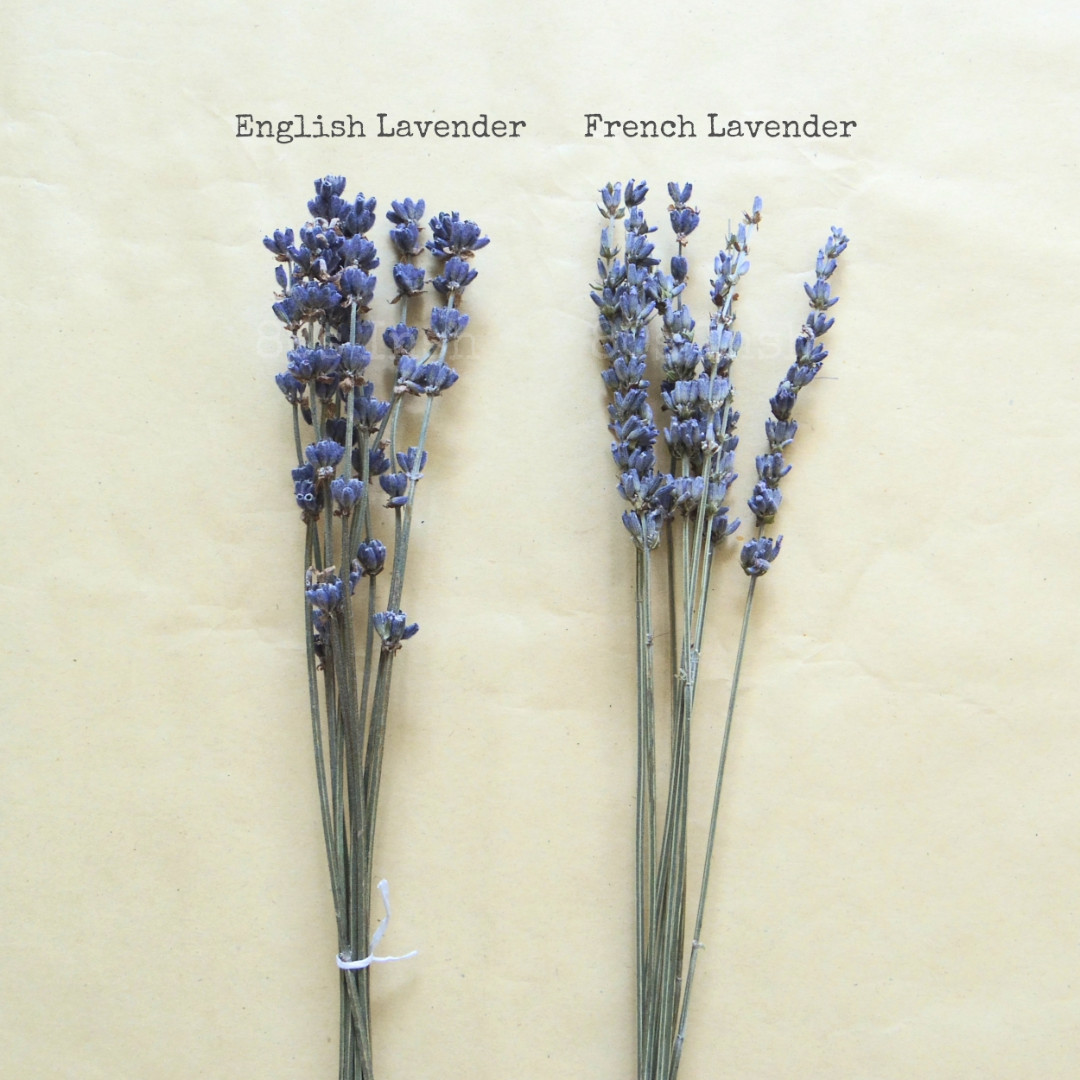 Dried Lavender Flower Stalks, Design & Craft, Craft Supplies