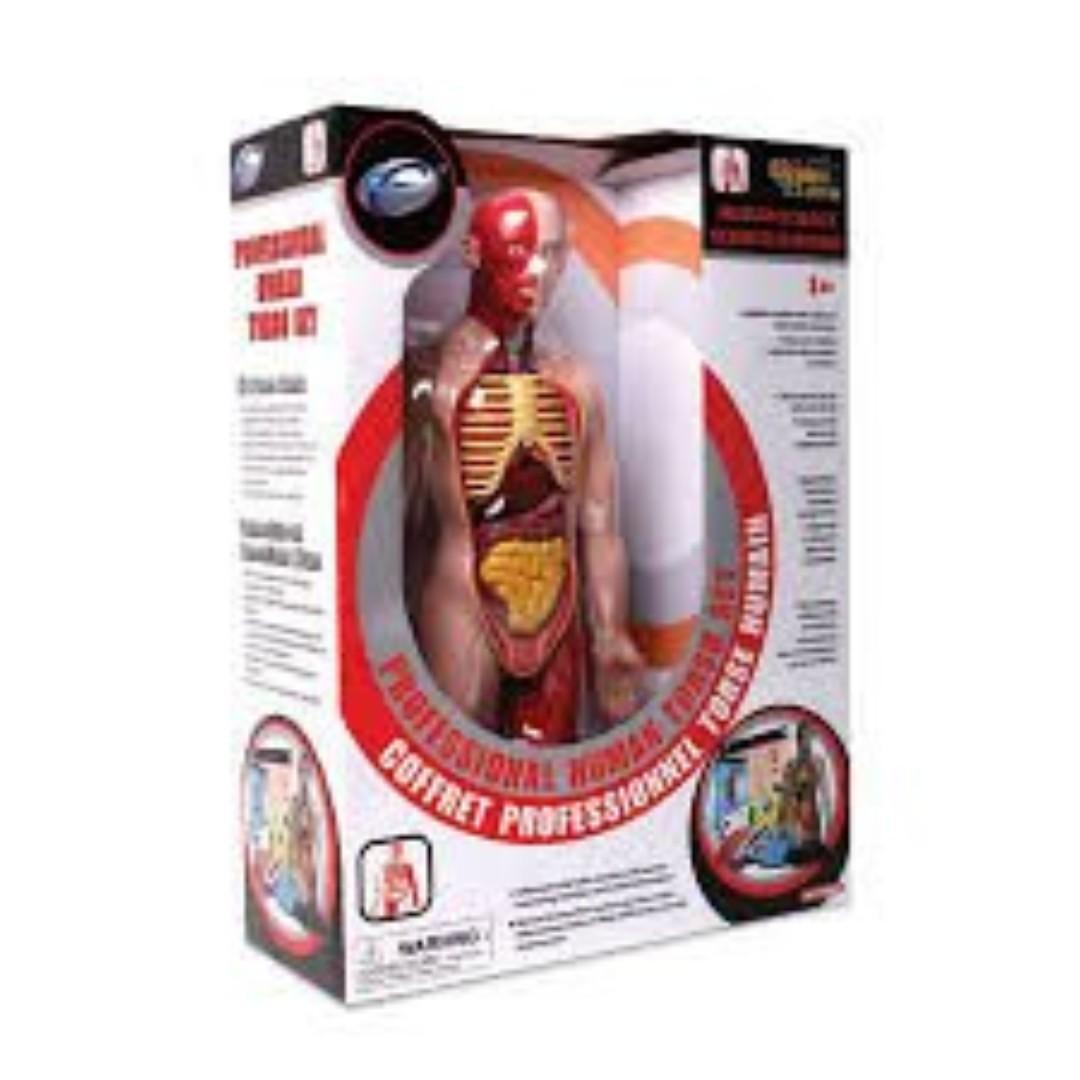 Professional Human Anatomy Torso Set Babies Kids On Carousell
