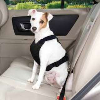 DOG CAT PET DUAL USE CHEST VEST HARNESS FOR WALK AND CAR SAFETY SEAT BELT