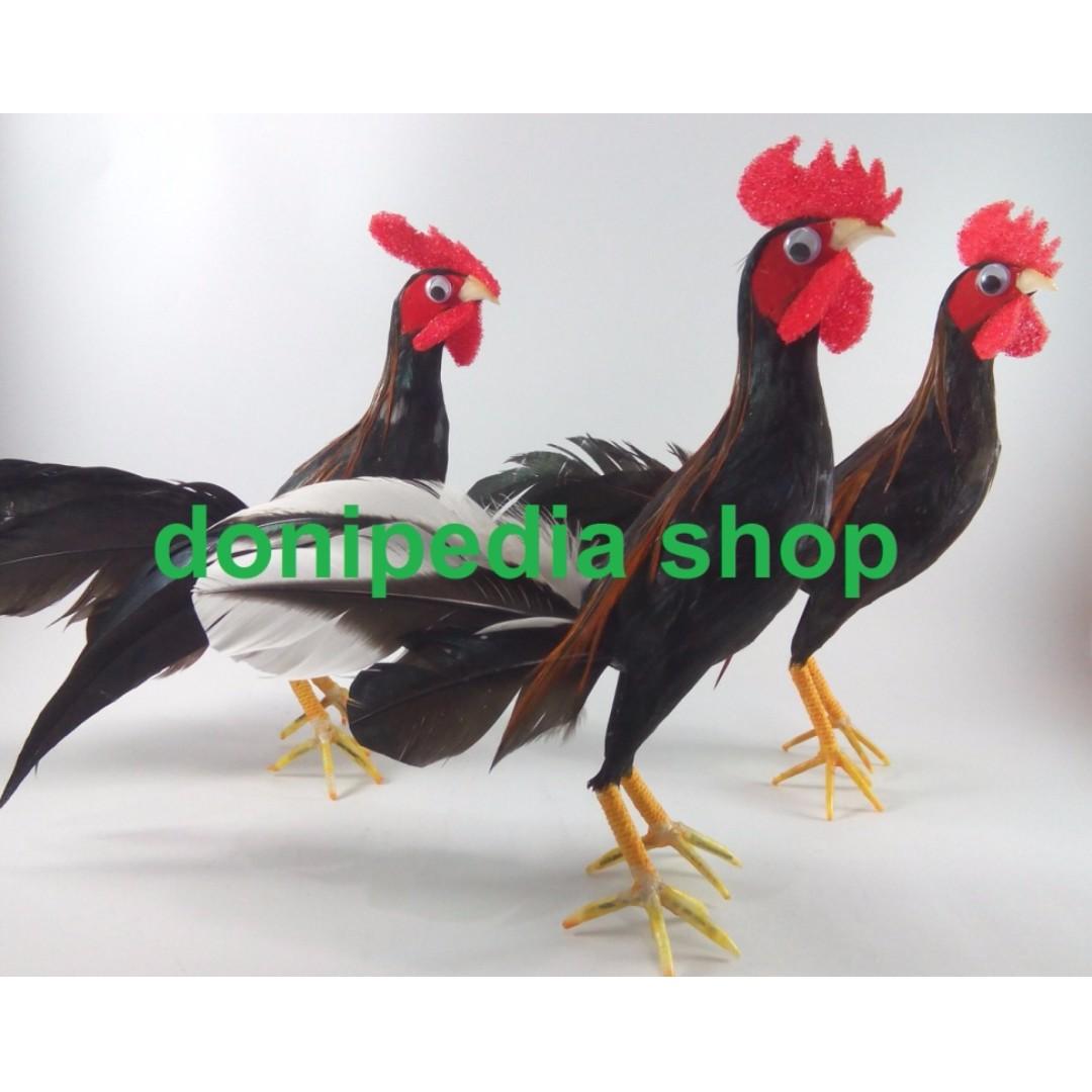 Lucu Naik Ayam Ktawaayo Ketawa