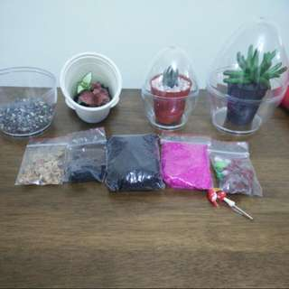 Egg Terrarium Kit