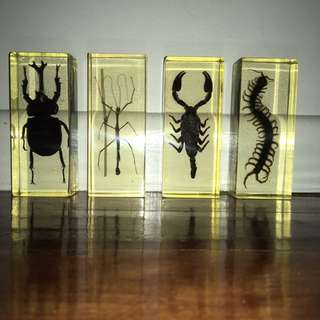Preserved Insects, National Geographics