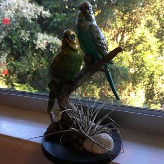 Budgie And Air Plant Ornament