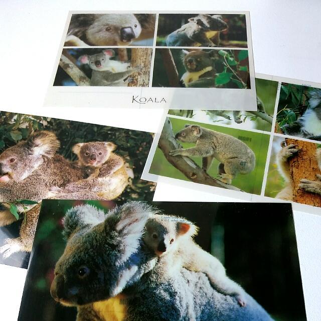 木柵動物園 無尾熊千禧年紀念郵卡