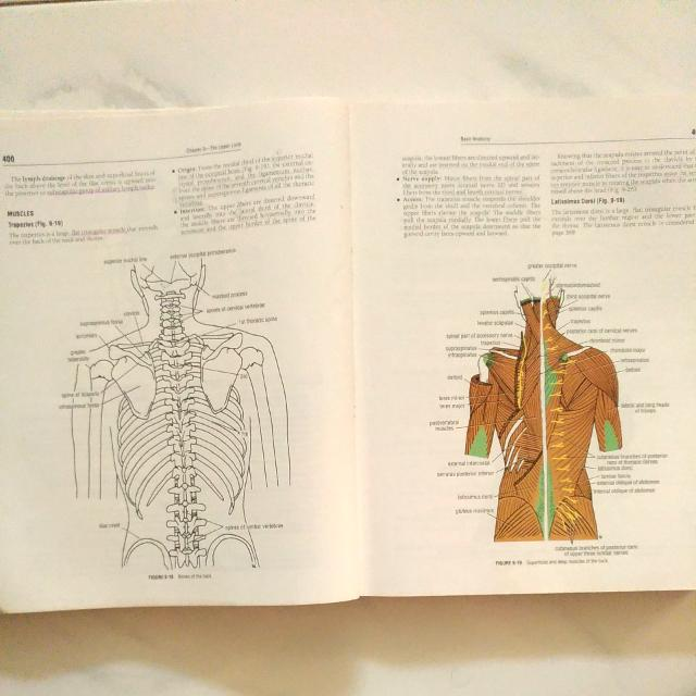 Clinical Anatomy For Medical Students 5th Edition Books
