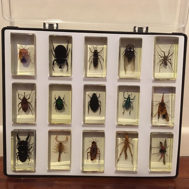 Full Set Of Preserved National Geographic Insects