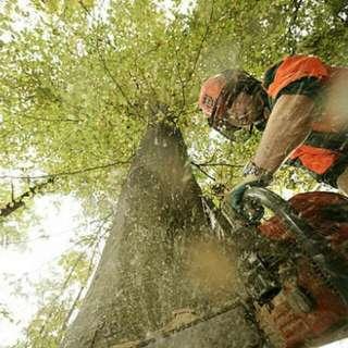 Perkidmatan Potong Pokok Besar Berbahaya
