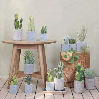 PO Potted Artificial Cactus