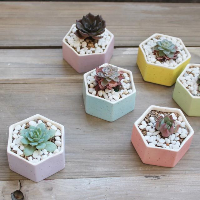 hexagonal pastel plant pot succulent cactus planter flower