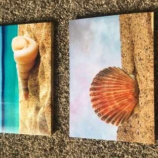 Two Sea Shell Wall Photos