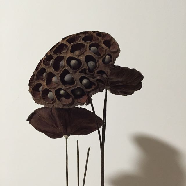 Dried Lotus Flower Furniture Home Decor On Carousell