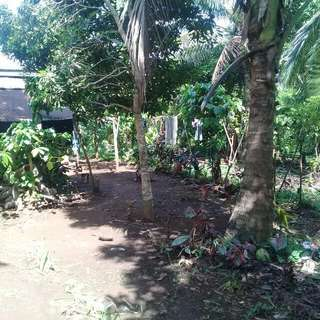 farm lot 1.3 hectares alfonso cavite 500/sq meter