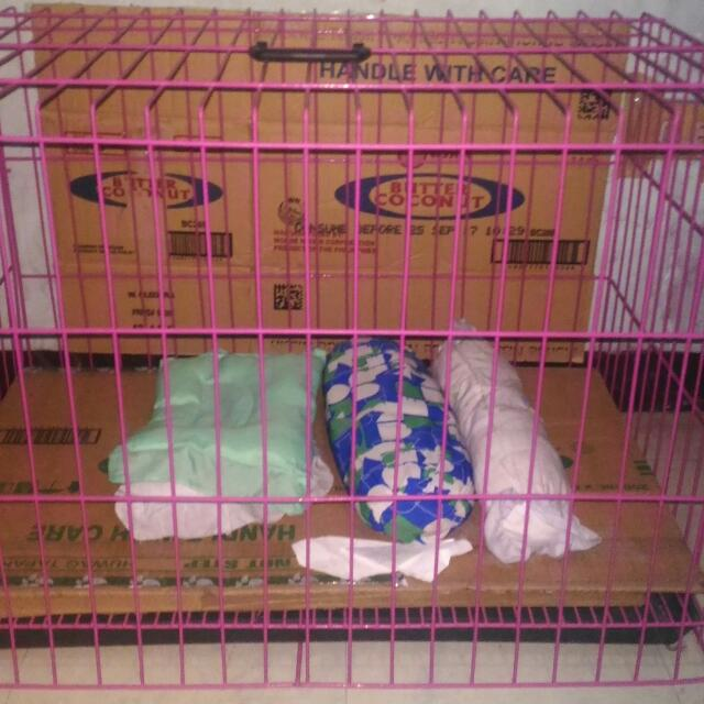 Pink Unfoldable L Cage w/Poop Tray