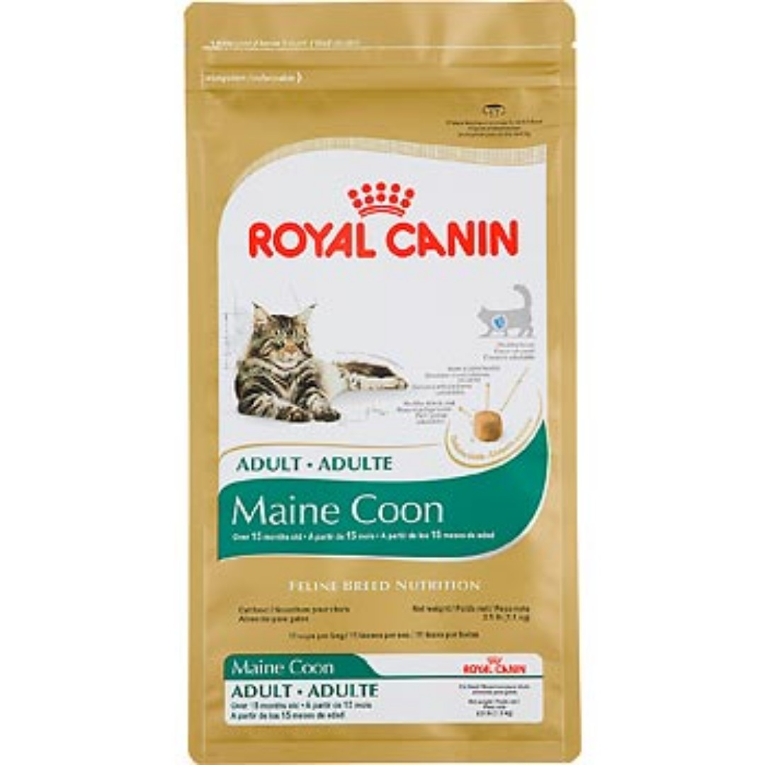 amazing amazing royal canin maine coon kg with royal canin maine coon with royal canin maine coon
