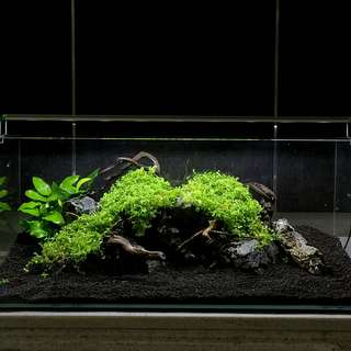 Planted Tank Setup