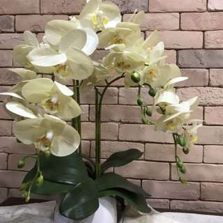 Pot Of White Orchids