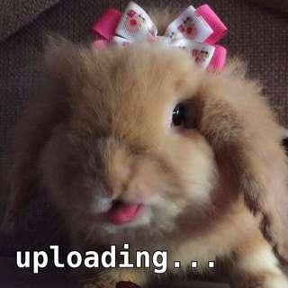 Currently uploading...